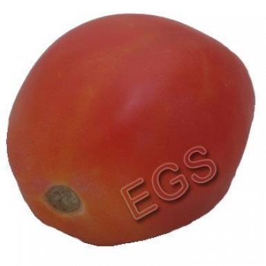 Fresh Tomato 1KG